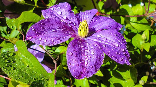 Purple rain by Sergio Aguayo