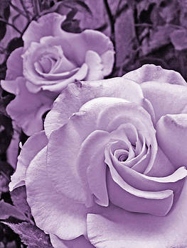 Purple Roses by Robin Hewitt