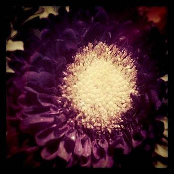 Purple. by S Michelle Reese