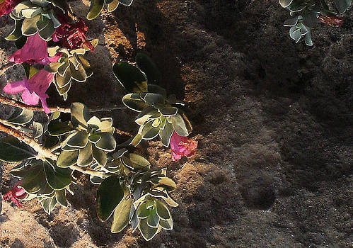 Purple Sage and Desert Rock in Morning Light by Louis Nugent