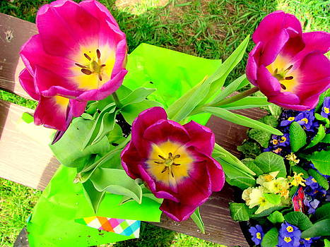 Purple Tulips by Amy Bradley