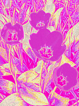 Purple Tulips by Tracy Daniels