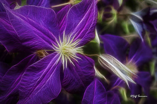 PurpleFlower by Jeff Swanson