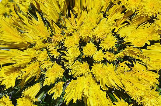 Pushing Daisys.......... by Tanya Tanski