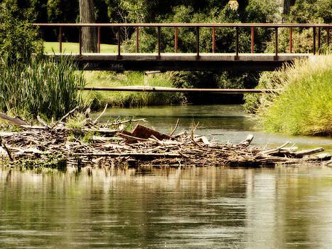 Quiet waters by Carol Kristensen