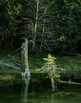 Quinault River Olympic Penninsula by John Wolf
