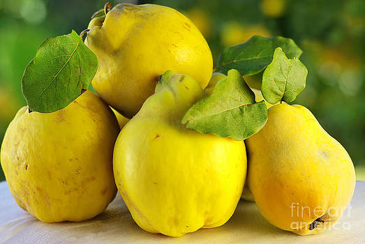 Quince On A Green Background  by Inacio Pires