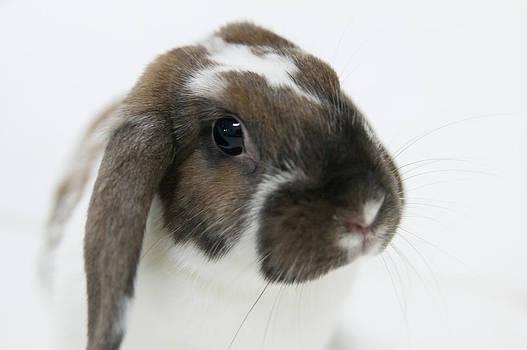 Rabbit by Yuria