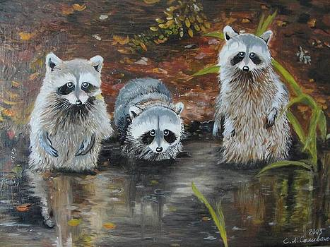 Raccoons by Sergey Selivanov