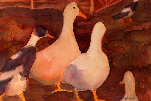 Racing Ducks by Cheryl Whitehall