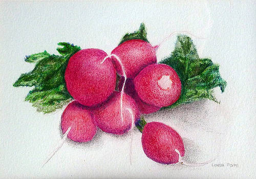 Radishes by Linda Pope