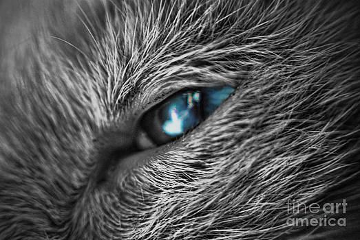 Yhun Suarez - Raging Blue