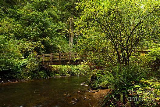 Adam Jewell - Rain Forest Bridge