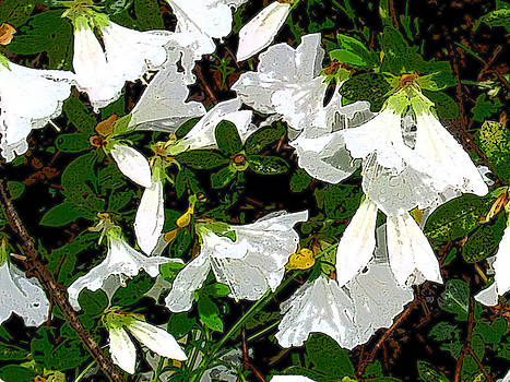 Rain-Soaked White Flowers by Tracy Daniels
