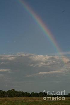 Rainbow Botswana by Carol Wright