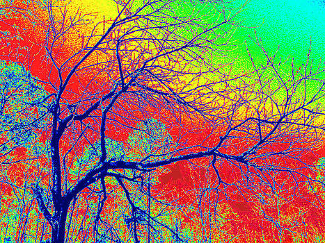 Rainbow Trees by Tracy Daniels
