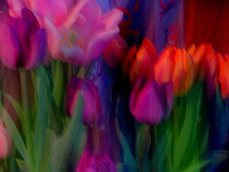 Rainbow Tulips by Amy Bradley