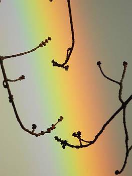 Rainbow Veins by Jordan Shepard