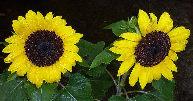 Baato   - rainflowers
