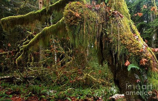 Adam Jewell - Rainforest Jaws