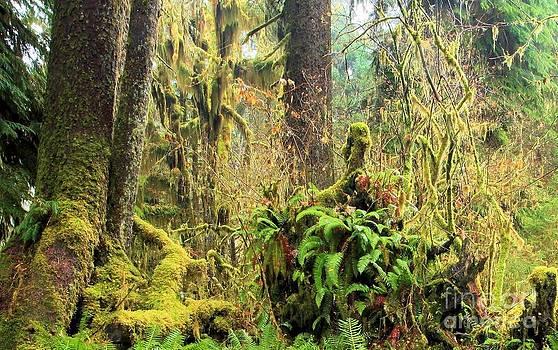 Adam Jewell - Rainforest Salad Bar
