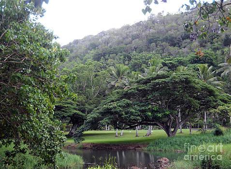 Raintrees at Waimea by Ruth Kongaika