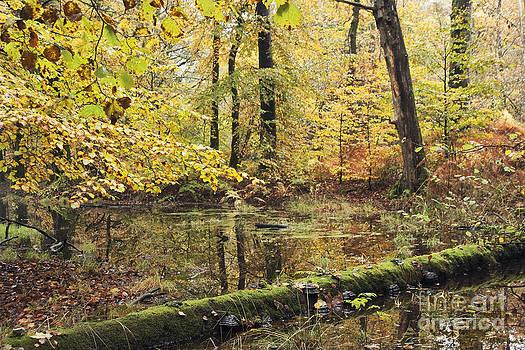 Rainy Autumn by Wedigo Ferchland