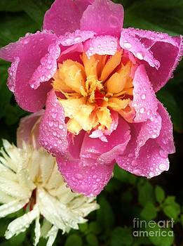 Rainy Day 1 by Caroline Ferrante