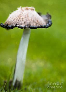 Susan Gary - Rainy Day Mushroom
