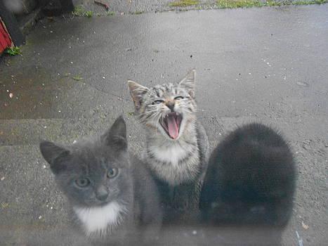 Rainy Day Yawning Away by Raul Gubert