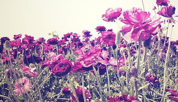 Ranunculus Blooms - 2 by Melina Geil