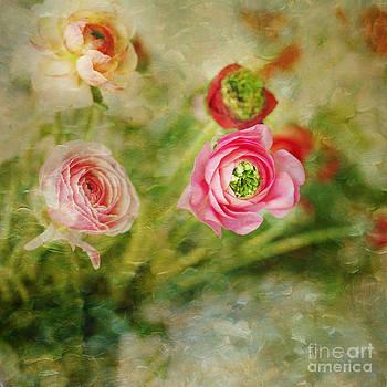 Ranunculus Painterly by Susan Gary