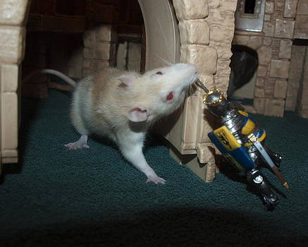Rat and Knight by Kristal Kobold