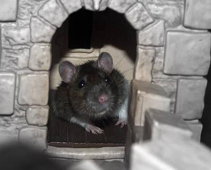 Rat in castle by Kristal Kobold
