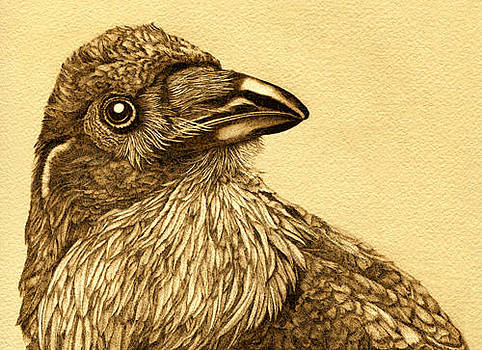 Raven Portrait by Cate McCauley