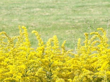 RAW Fall Captures Amazing Yellow by Catherine Herbert