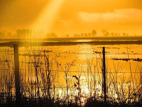 Rays of Gold by Shannon Hill