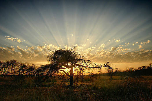 Rays of light by Erik Tanghe