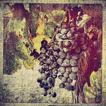 Ready For Harvest #grapes #wine #winery by Denise Taylor
