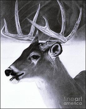 Realistic Pencil Drawing of a Deer by Debbie Engel
