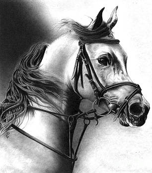 Realistic Pencil Drawing of a Lipizzan Stallion  by Debbie Engel