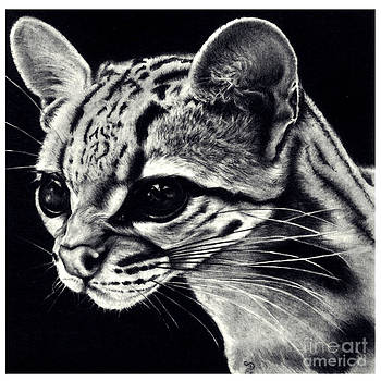 Realistic Pencil Drawing of a Ocelot by Debbie Engel