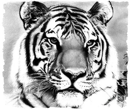 Realistic Pencil Drawing of a Tiger by Debbie Engel