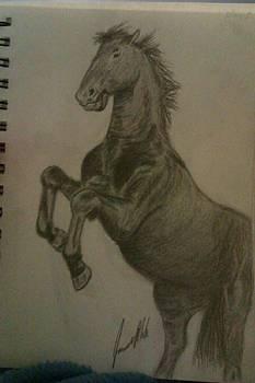 Rearing Horse by Jamie Mah