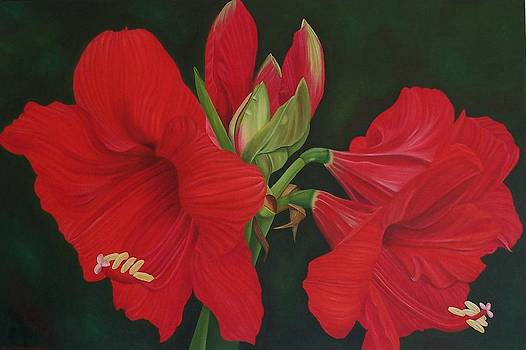Red Amaryllis by Pera  Schillings