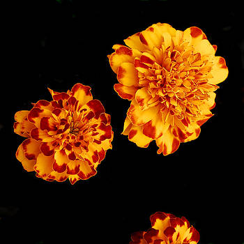 Red And Yellow by Barry Shaffer