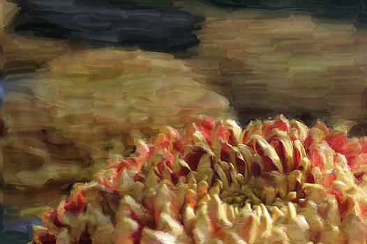 Red and Yellow Mum by Joe Paniccia