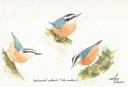 Red-breasted nuthatches by Wenfei Tong