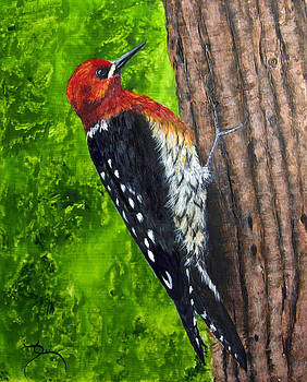 Dee Carpenter - Red Breasted Sapsucker