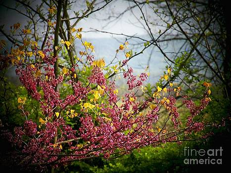 Red Buds by the Mountain by Joyce Kimble Smith